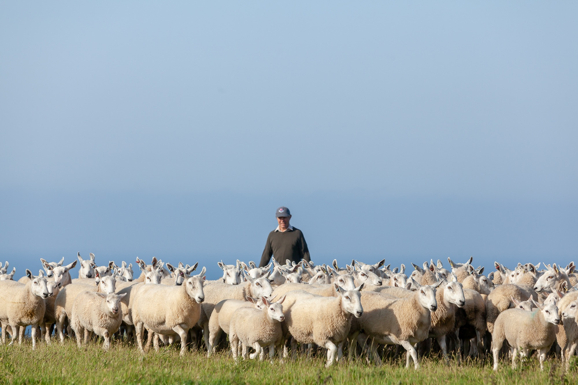 The Difference Between Lamb, Hogget & Mutton